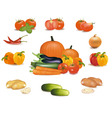 super group some vegetables vector image vector image