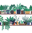 house plants standing on wooden shelf greenhouse vector image vector image