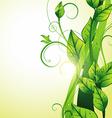 beautiful growing leaf vector image vector image