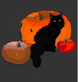 black cat and pumpkin still life for halloween vector image