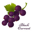 black currant with leaves icon vector image vector image