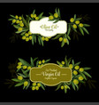 olive oil label with green branch and ripe fruit vector image vector image