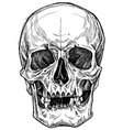 skull drawing line work vector image vector image