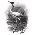 whooping crane vintage vector image vector image