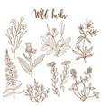wild herbs set vector image vector image
