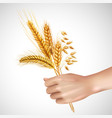 spikelets in hand realistic composition vector image vector image