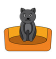 cat animal pet in the bed vector image vector image
