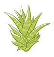 aloe flower green succulent plant with thick vector image