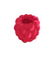 flat cartoon small rich forest raspberry cutout vector image vector image