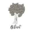 Olive tree with dense krone vector image