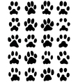 print of cats paws vector image vector image