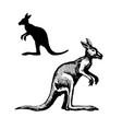Symbol of australia