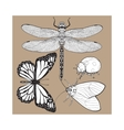 Set of insects like dragonfly butterfly ladybird vector image
