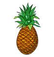 cartoon image of pineapple vector image vector image