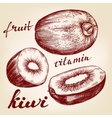 fruit kiwi set hand drawn llustration vector image vector image