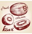 fruit kiwi set hand drawn vector image vector image