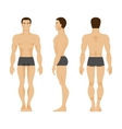 Male anatomy vector image