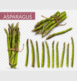 asparagus realistic transparent set vector image vector image