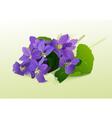 garden flower vector image