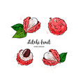 litchi fruit drawing lychee watercolor litchi on vector image vector image