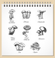 ink edible mushrooms set vector image