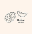 melon fruit drawing sketch melon on a white vector image vector image