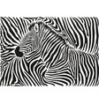 background with a zebra motif vector image vector image