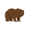 brown bear hunt and zoo wild animal vector image vector image