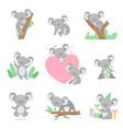 collection cute coala bear animals cartoon vector image