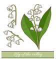 colored lily of the valley in hand drawn style vector image vector image