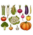 isolated farm vegetables sketches vector image vector image