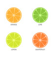 pieces of citrus fruits vector image