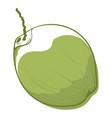 unripe coconut green tropical palm fruit symbol vector image vector image