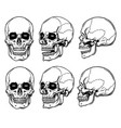 anatomi skull vector image