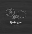 Nectarine fruit drawing half nectarine with bone