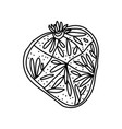 passion fruit slice doodle slice fruit vector image vector image