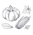 pumpkin and corn seeds sketches outline set vector image