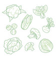 cabbage vegetarian farm products set hand-drawn vector image vector image