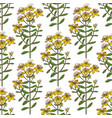 hypericum pattern in hand drawn style vector image