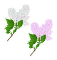 lilac twigs multicolored and light pink vector image vector image