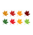 mapple leaves logo and symbol vector image