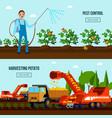 potato cultivation flat compositions vector image