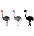 set of ostrich character vector image vector image