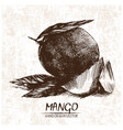 digital detailed mango hand drawn vector image vector image