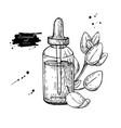 oregano essential oil bottle and oregano leaves vector image
