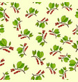 schisandra seamless pattern vector image vector image
