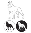 Staffordshire Terrier vector image vector image