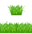 green grass tuft and border on white background vector image vector image