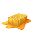 honey combs vector image