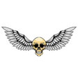 thin human skull with silver wing for the vector image vector image